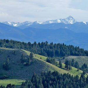 Finding common ground in our backyard national forest