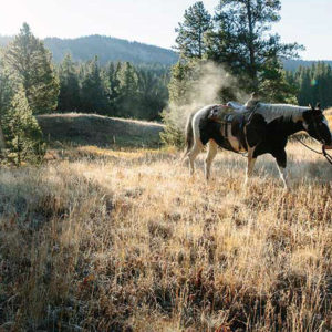 Six Spectacular Fall Adventures in the Madison and Gallatin Ranges
