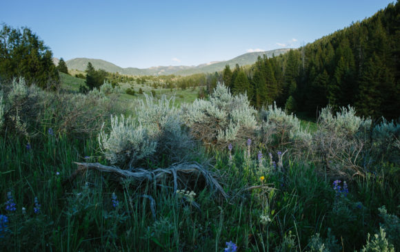 Get Ready: Forest Plan Expected in September (plus a special sneak peek)